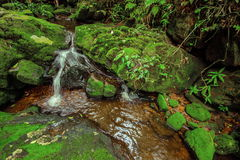 Beautiful waterfall in green forest in jungle at Phu Soi Dao mou Royalty Free Stock Photo