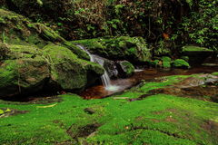 Beautiful waterfall in green forest in jungle at Phu Soi Dao mou Royalty Free Stock Photos