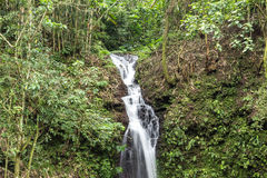 Beautiful waterfall in green forest in jungle in tropical Bali island, Indonesia. North of Bali island. Rainforest scene Stock Image