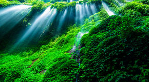 Beautiful waterfall in the green forest Royalty Free Stock Images