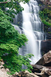 Beautiful waterfall and green maple tree Stock Photo