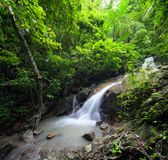 Beautiful waterfall in jungle forest Royalty Free Stock Image