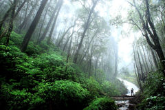 Beautiful Waterfall with mist in rainforest, Chiang Mai, Thailan Stock Photo