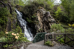 Beautiful Waterfall and Plants Flowers English Garden Scotland Stock Images