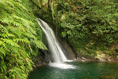 Beautiful waterfall in a rainforest, Guadeloupe, Caribbean Islands, France Royalty Free Stock Images