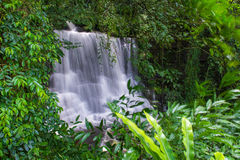 beautiful waterfall in rainforest at phu tub berk mountain  phet Royalty Free Stock Images