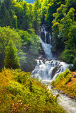 Beautiful waterfall shrouded fresh leaves near the Swiss village Royalty Free Stock Photography