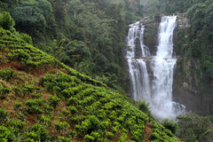 Beautiful waterfall in Sri Lanka Stock Photos