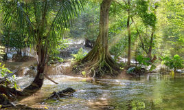Beautiful waterfall in tropical forest. Stock Image