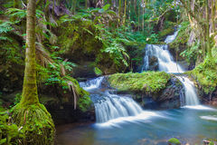 Beautiful waterfall. In tropical rainforest in Hawaii Royalty Free Stock Photography