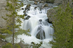 Beautiful waterfall in Yellowstone National Park. Royalty Free Stock Photography