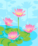 Beautiful waterlilys. Pond with beautiful pink lilies Royalty Free Stock Image