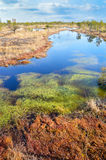 Beautiful waterscape in the bog. Stock Photos