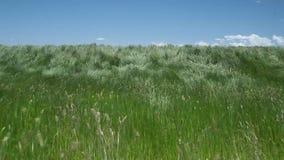Beautiful waving grass of wilderness stock video