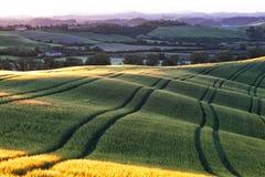 Beautiful wavy fields Stock Photos