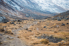 Beautiful way for trekking to Annapurna base camp Stock Photo