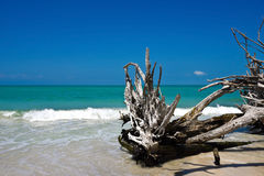 Beautiful Weathered Driftwood Royalty Free Stock Photography