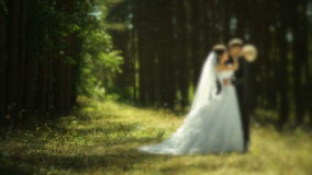 Beautiful wedding couple in forest stock video
