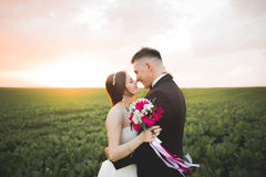Beautiful wedding couple, love on the sunset. Fielf with flowers Stock Image