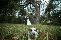 Beautiful wedding couple posing Royalty Free Stock Images