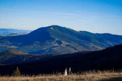 Beautiful wedding couple walking on the field. Wonderful mountain landscape Stock Images