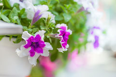 Beautiful wedding decorations. Delicate bright flowers in a pot on a fence Stock Image