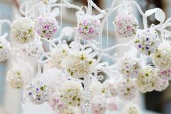 Beautiful flowers decoration Stock Photography
