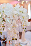 Beauty bride in bridal gown with lace veil is throwing wedding bouquet indoors Royalty Free Stock Photography