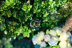 Beautiful wedding rings on a green leaf close-up Royalty Free Stock Photography