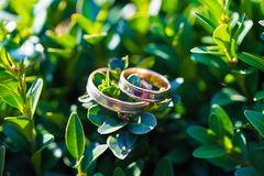 Beautiful wedding rings on a green leaf close-up Stock Image