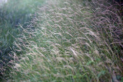 Beautiful weeds Royalty Free Stock Photos