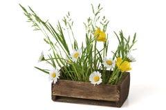 Beautiful Weeds Stock Photos