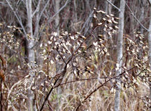 Beautiful weeds among the birch trees Royalty Free Stock Photo