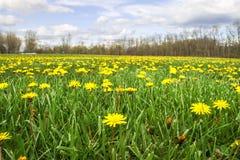 Beautiful Weeds Stock Photo