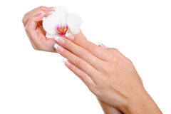 Beautiful Well-groomed Female Hand With Flower Stock Photography