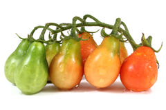 Beautiful wet cluster of little tomatoes Royalty Free Stock Images