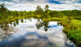Beautiful wetland. Yaroslavl region, Russia Stock Image