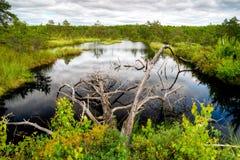 Beautiful wetland Stock Photography