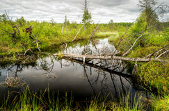 Beautiful wetland Stock Image