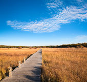 Beautiful wetland park in autumn Royalty Free Stock Photography