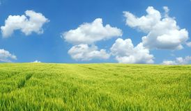 Beautiful wheat field. Background XXL Stock Photo