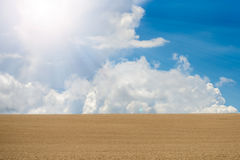 Beautiful wheat  field Stock Photography