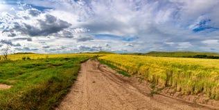Beautiful wheat field in windy weather. Field against the sky. Ukrainian landscape. Ukraine.  stock images