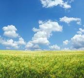 Beautiful wheat field XXL. Beautiful wheat field background XXL Stock Image