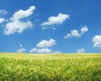 Beautiful wheat field XXL Stock Photography