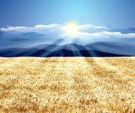 Beautiful wheat landscape. Agriculture concept Stock Image