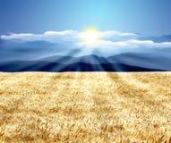 Beautiful wheat landscape Stock Image