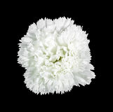 Beautiful white artifical flower isolated Stock Photos