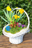 Beautiful white Basket with sping flowers Stock Photography