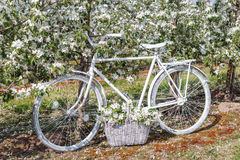 Beautiful white bike is in the apple lush garden with a basket of flowers Stock Photography